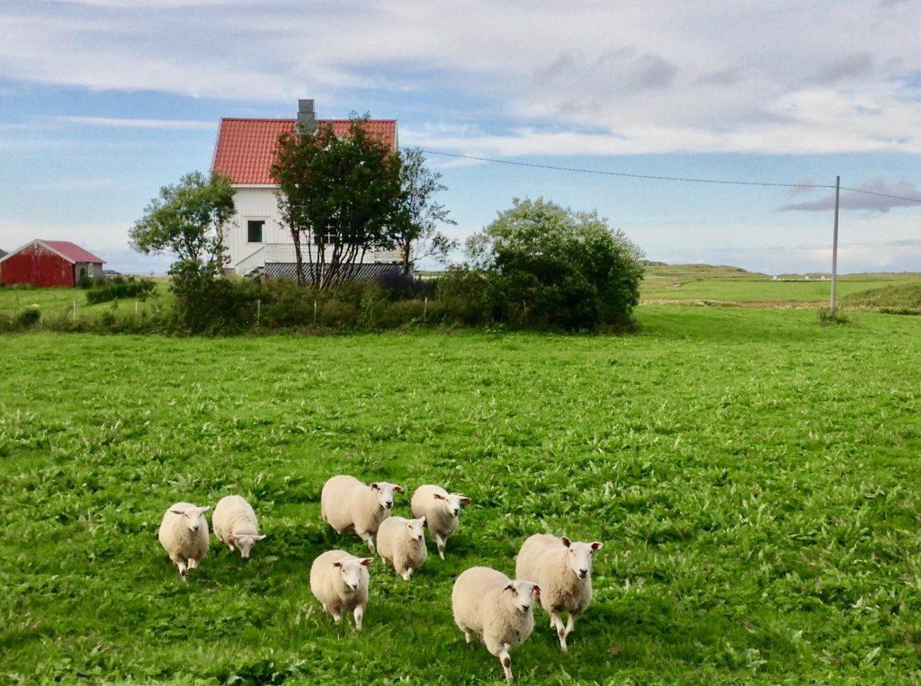 Reisen mit Kind – und Schafen