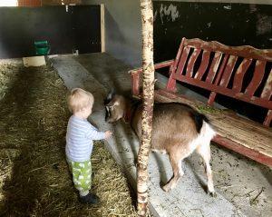 Baumhaushotel – Ziegen zum Streicheln