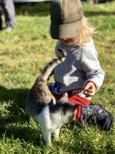 Kindermärchen inspiriert von Katzen