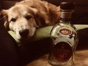Whiskey und Hund Whiskey sind alle