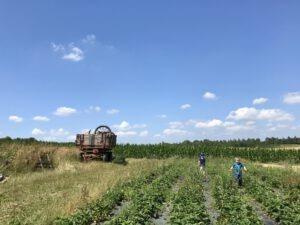 Gärtnern mit Kindern – 2 Kinder auf dem Biohof