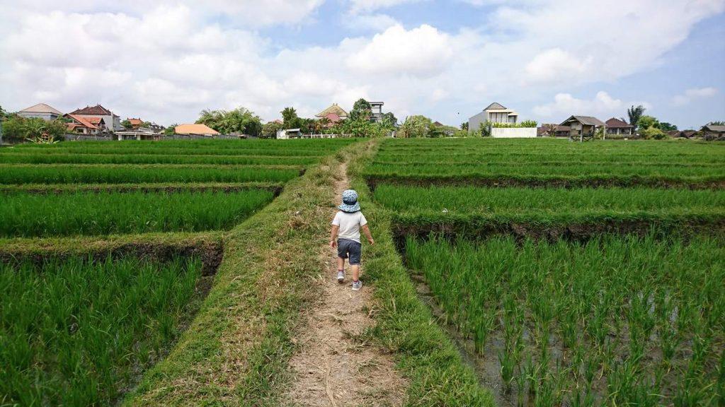 Langzeitreisen mit Kind – ein Junge läuft zwischen Reisfeldern.