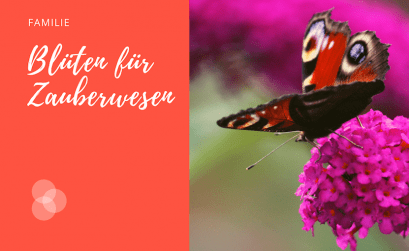 Heimische Schmetterlinge – Tagpfauenauge auf Schmetterlingsflieder