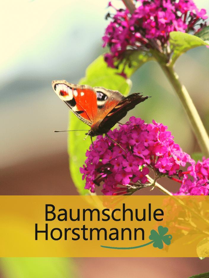 Family Garden – Baumschule Horstmann