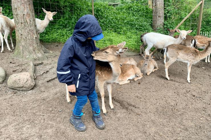 Wildpark Lüneburger Heide – Reh knabbert an Merlins Jacke