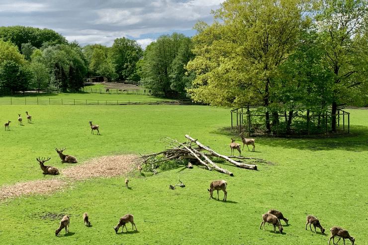 Wildpark Lüneburger Heide – Wildgehege